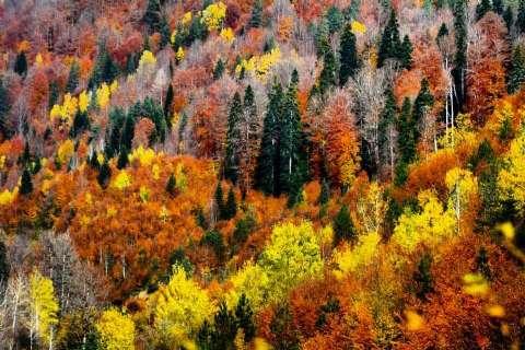 13-14 Kasım Yenice Ormanları-Şeker Kanyonu Sonbahar Doğa Yürüyüşü